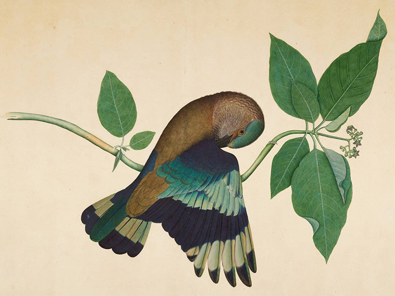 Forgotten Masters: Indian Painting for the East India Company at the Wallace Collection